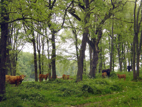 Bosc de Casanovas